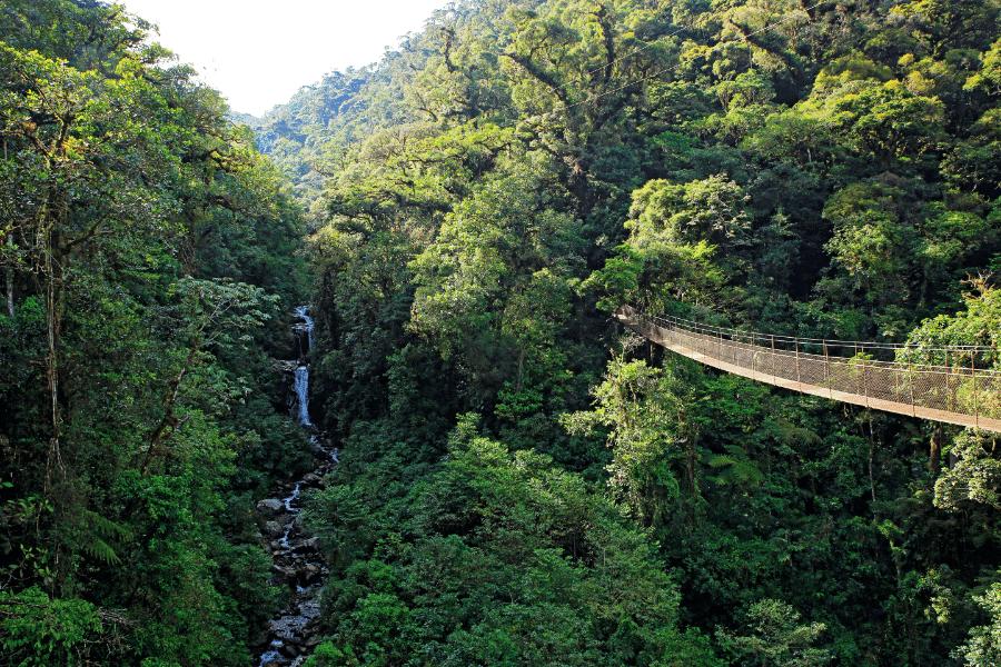 Panama Reforestation Visa