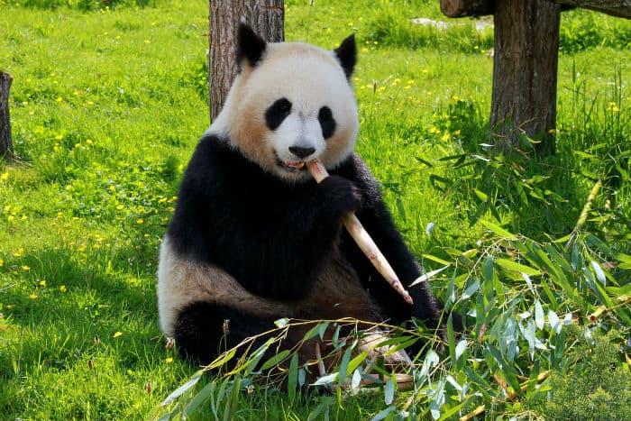 Chengdu, China low business taxes