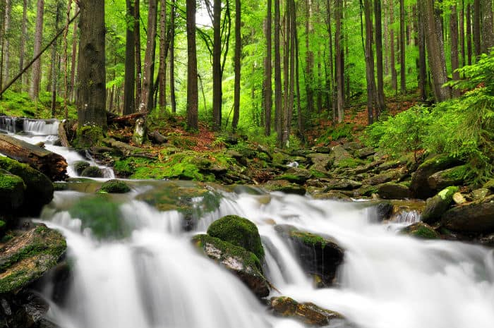 A river flows through the forest.