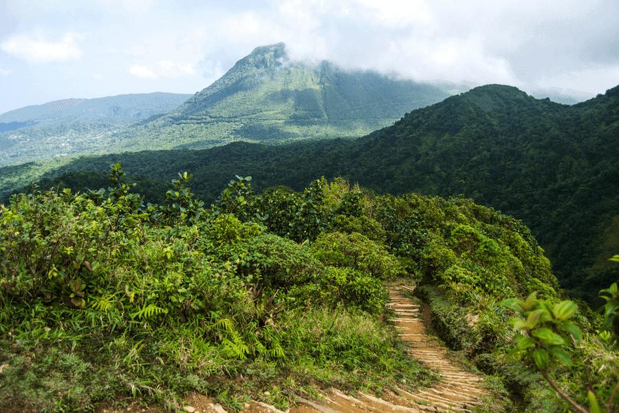 Dominica Mountain Landscape