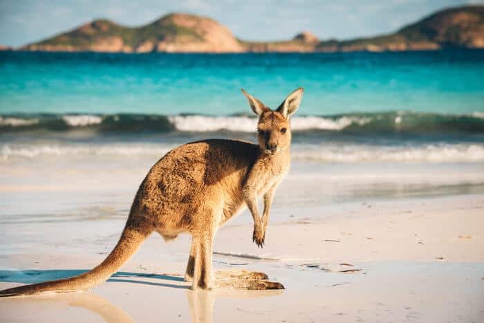 How to open an Australian bank account