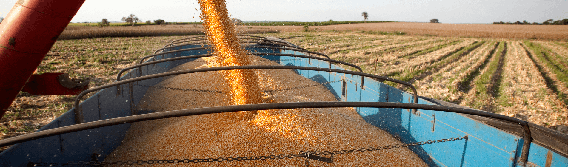 Buying farmland in Paraguay, Uruguay, and Brazil