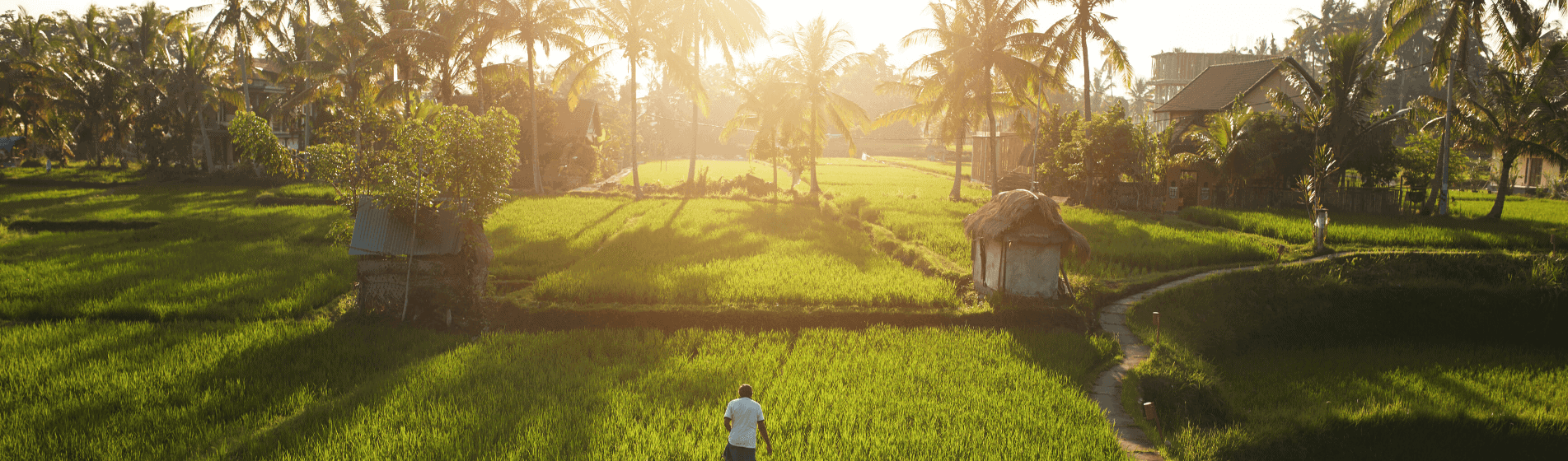 How I lost $5,000 investing in the Laos Rice Bank
