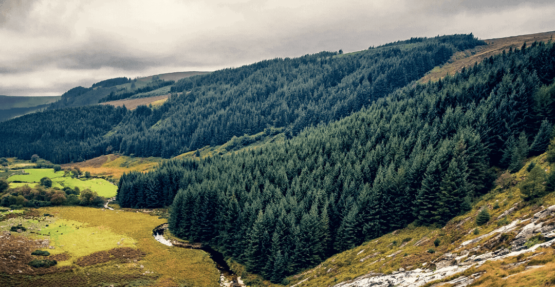 How to invest in Irish forestry