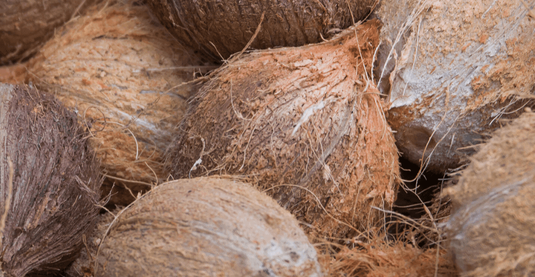 Investing in coconuts: scam or legitimate agriculture opportunity?