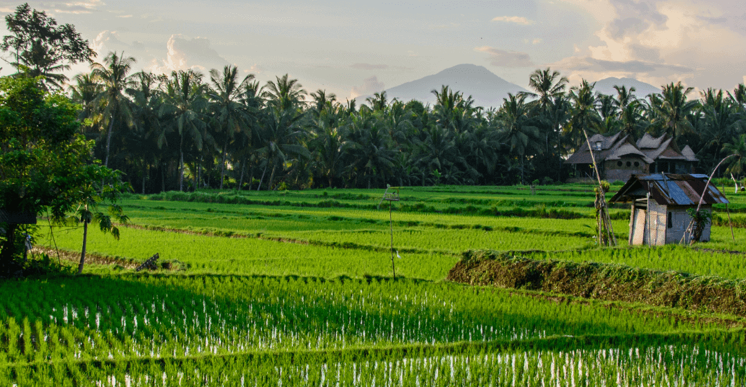 Why you should be investing in Bali real estate