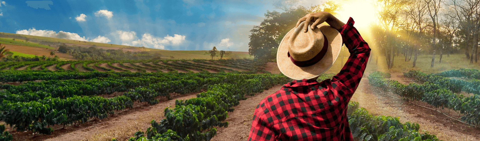 Why you should consider becoming a farmer in South America
