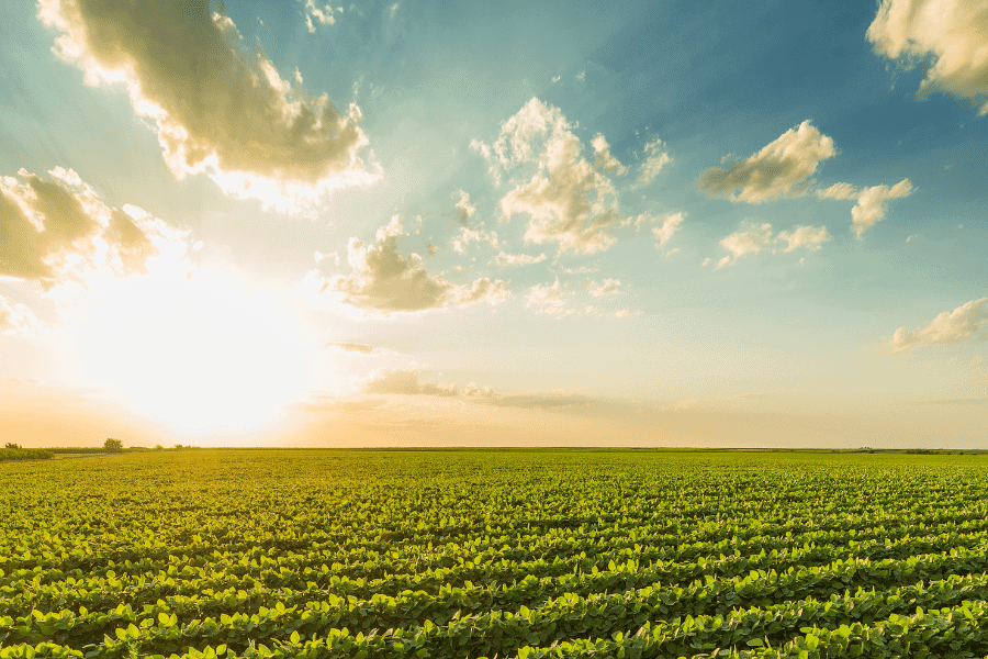 Invest in Agricultural Farmland as a Store of Value